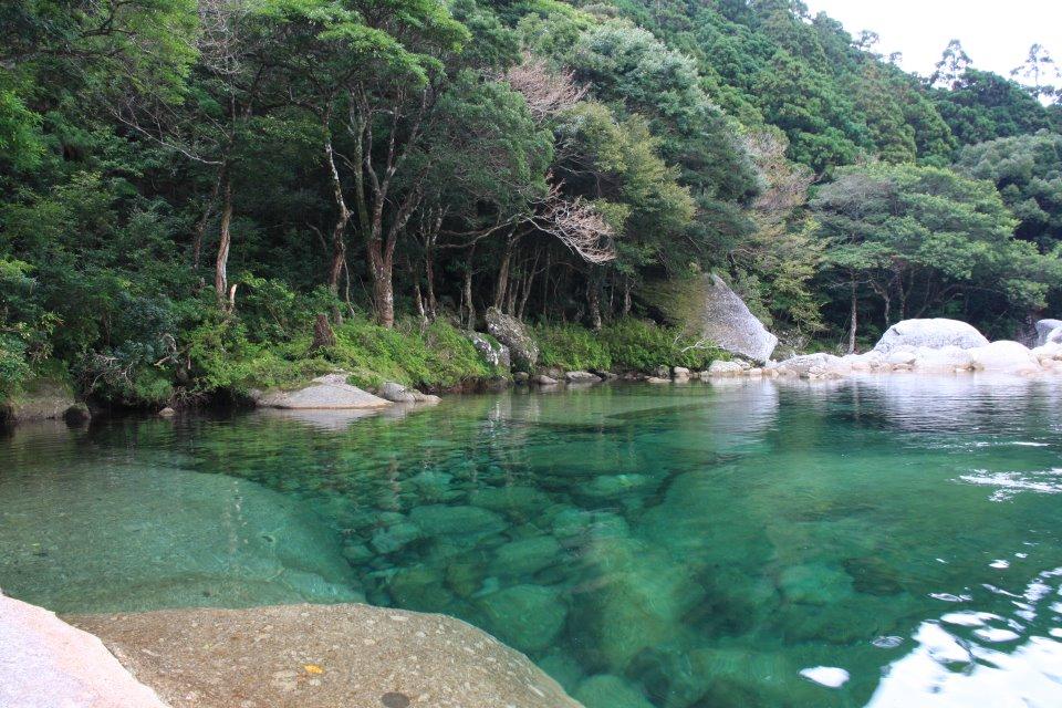 横河のプール