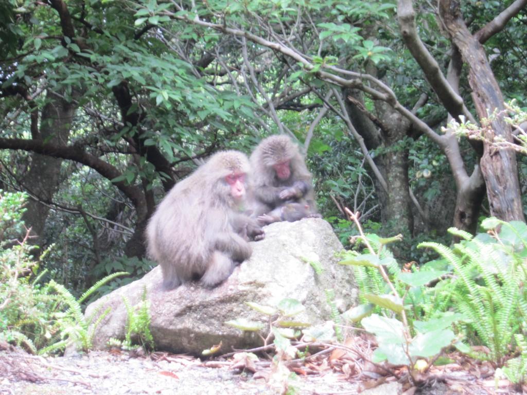 西部林道の猿